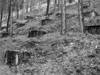 Grounding relicts - Hirschbachtal